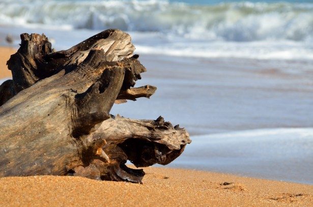 driftwood-on-the-ocean-surf